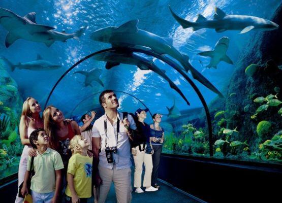 Loro Park Akwarium. Ferie zimowe na Wyspach Kanaryjskich.