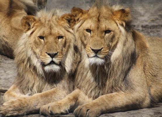 karpacz-zoo-safarii-dvur-kralove01